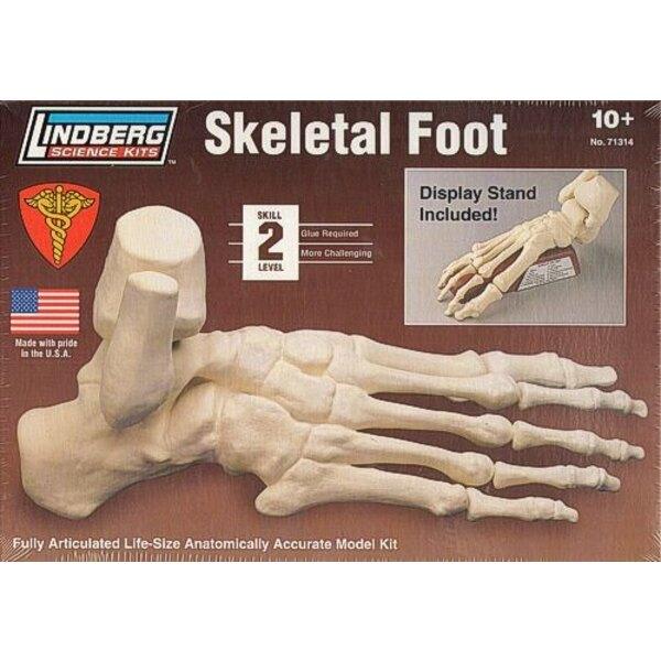 Skeletal Foot